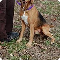 Adopt A Pet :: Brinx - Richmond, VA