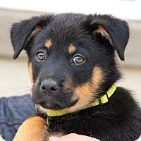 Adopt A Pet :: Melbourne von Portia - Thousand Oaks, CA