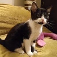 Adopt A Pet :: Claire - Agoura Hills, CA