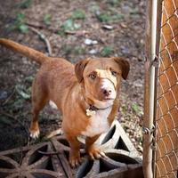 Adopt A Pet :: Pablo - Eugene, OR