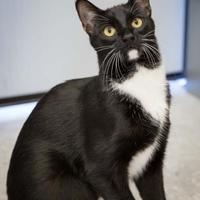 Adopt A Pet :: Al - Garland, TX