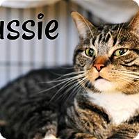 Adopt A Pet :: Jussie - Cleveland, TN