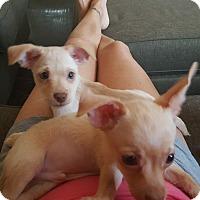 Adopt A Pet :: HERO - Rancho Cucamonga, CA
