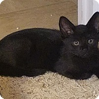 Adopt A Pet :: Yoda - Greenville, NC