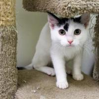 Adopt A Pet :: Lumus - Lynchburg, VA