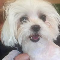 Adopt A Pet :: MARIO - Palm Desert, CA