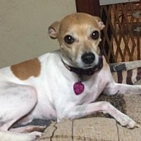 Adopt A Pet :: Bently - Pardeeville, WI