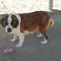 Adopt A Pet :: JOSEPHINE - Sparks, NV
