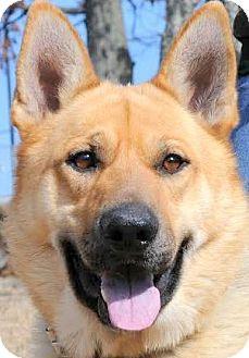 German Shepherd Dog Dog for adoption in Wakefield, Rhode Island - KADE(WOW!! SO SMART!!
