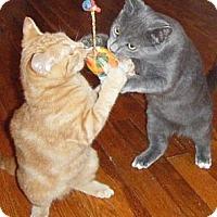 Adopt A Pet :: Dusty & Rusty - Kensington, MD