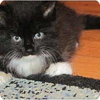 Adopt A Pet :: Piper - Oxford, CT