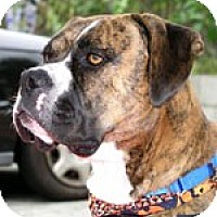 Adopt A Pet :: Romeo - Santa Monica, CA