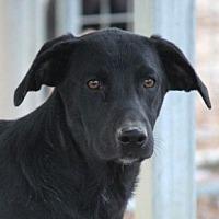 Adopt A Pet :: Idaho - Cranston, RI