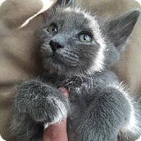 Adopt A Pet :: Ashton - San Antonio, TX