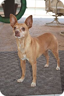 Chihuahua Mix Dog for adoption in Los Angeles, California - Charlie