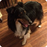 Adopt A Pet :: Bobby - Powell, OH