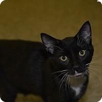 Adopt A Pet :: Tux - Medina, OH