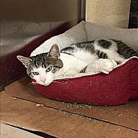 Adopt A Pet :: DASANI - Palmyra, NJ