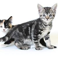 Adopt A Pet :: Bibi - Laplace, LA