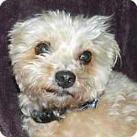Adopt A Pet :: Symphony - Umatilla, FL