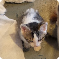 Adopt A Pet :: Cranberry - Geneseo, IL