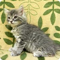Adopt A Pet :: Fern - Tyler, TX