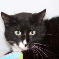 Adopt A Pet :: Boots - Westville, IN