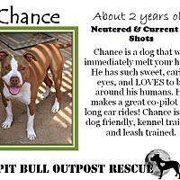 Adopt A Pet :: Chance - Lafayette, OR
