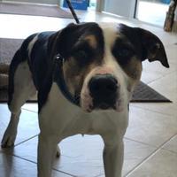 Adopt A Pet :: Kane - Barco, NC