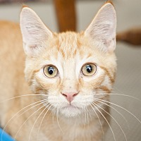 Adopt A Pet :: Harry - Shelton, WA