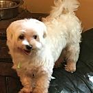 Adopt A Pet :: Colby-ADOPTION PENDING
