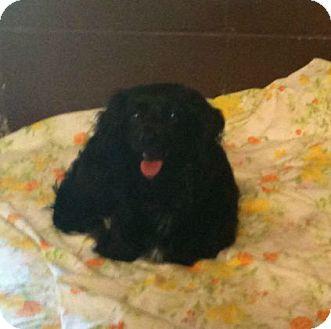 Dachshund Mix Dog for adoption in Yuba City, California - 06/07 Lady