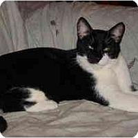 Adopt A Pet :: Poncho - Highland Springs, VA