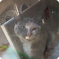 Adopt A Pet :: Lulu - West Dundee, IL