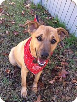 Labrador Retriever/Shepherd (Unknown Type) Mix Puppy for adoption in Lake Charles, Louisiana - Greta