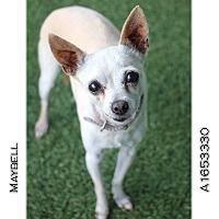 Adopt A Pet :: Maybell - Creston, CA