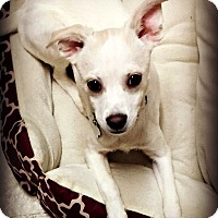 Adopt A Pet :: Tooter Scooter - Tijeras, NM