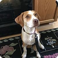 Adopt A Pet :: Buster - Winchester, VA