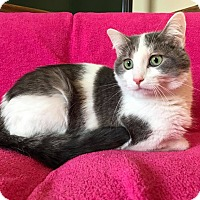 Adopt A Pet :: Gracie - Maryville, MO