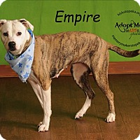 Pit Bull Terrier Mix Dog for adoption in Topeka, Kansas - Empire