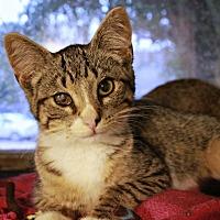 Adopt A Pet :: Miles - New Richmond,, WI