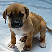 Adopt A Pet :: Ivy Wrigley - Alpharetta, GA