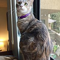 Adopt A Pet :: Yolanda Catid - Los Angeles, CA