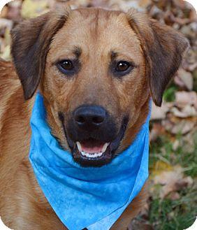 Labrador Retriever/Hound (Unknown Type) Mix Dog for adoption in Plainfield, Connecticut - Al