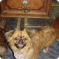 Adopt A Pet :: MISS PUGSLEY - Cathedral City, CA