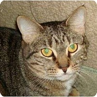 Adopt A Pet :: Isabell - Port Republic, MD