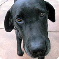 Adopt A Pet :: Homer - Oakley, CA