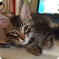 Adopt A Pet :: Smokey Bones - Acme, PA