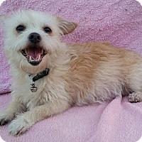 Adopt A Pet :: Tessie - Temecula, CA