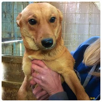 Labrador Retriever Mix Dog for adoption in Powder Springs, Georgia - Nora